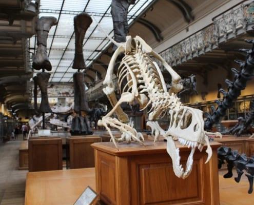 esqueleto de dinosaurio en museo