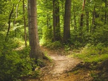 Curso de Restauración ecológica de ecosistemas forestales