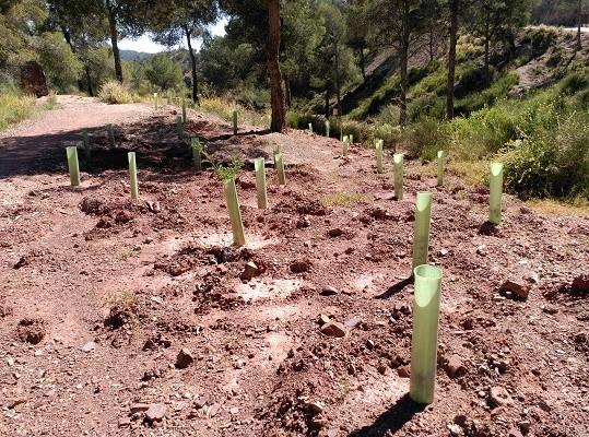¿Cuál es la proyección de la restauración forestal en Sudamérica?