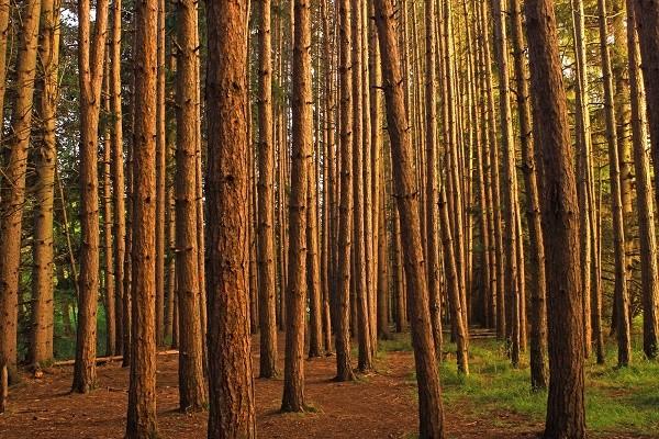 """¿Qué diferencia al """"Curso de restauración ecológica de ecosistemas forestales"""" de otros similares?"""