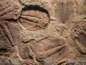 Curso de Paleontología básica