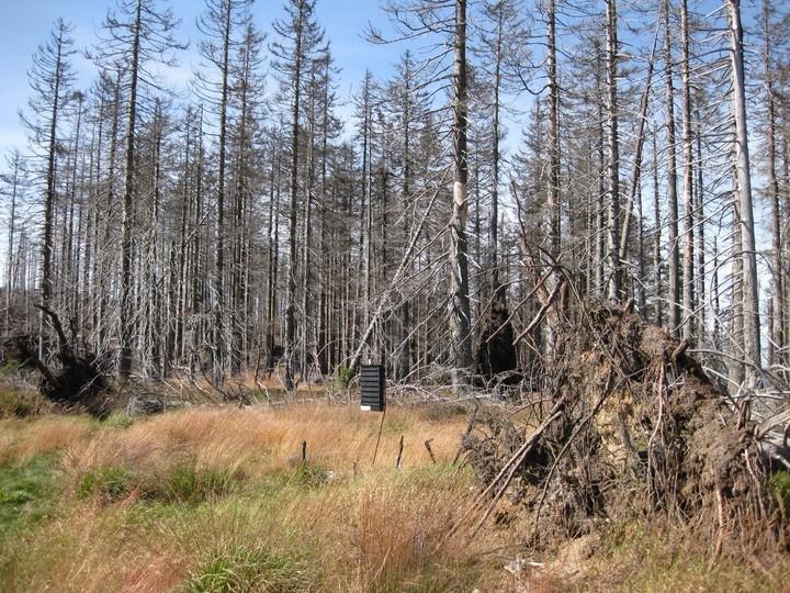 bosque despues de lluvia acida