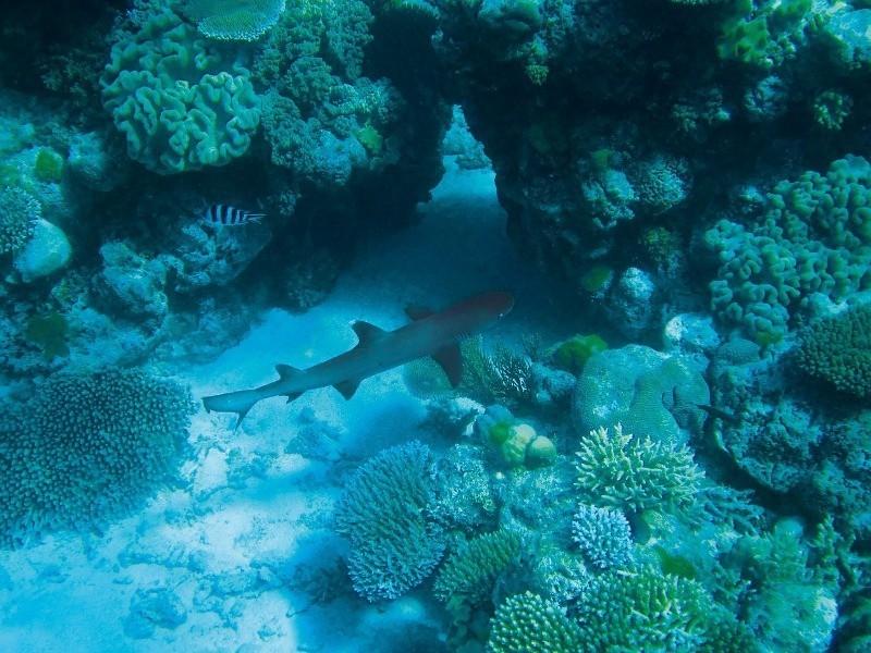Fosas marinas: origen, estructura y misterios de las profundidades oceánicas
