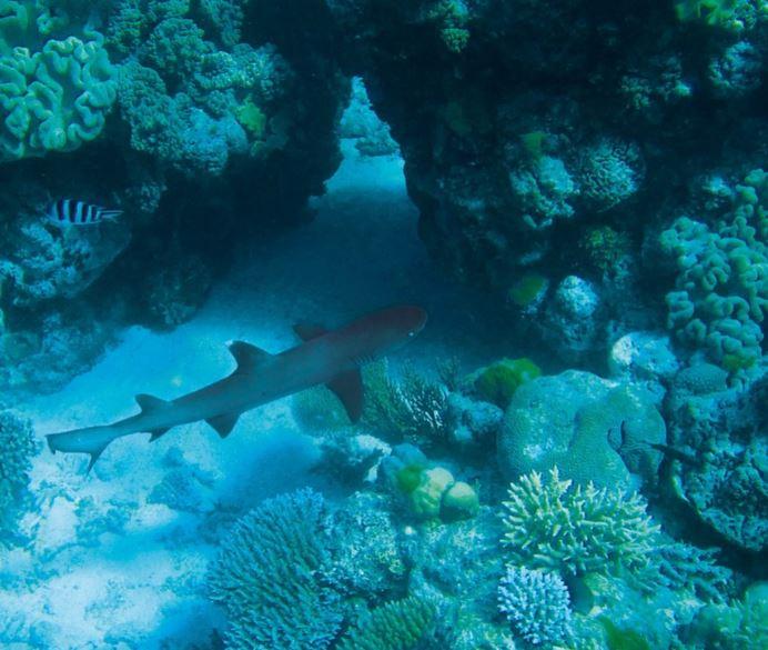 Fosas marinas: origen y misterios de lo profundo | Ingeoexpert