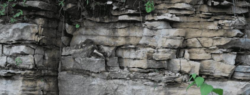 Tipos de rocas sedimentarias caliza con hojas