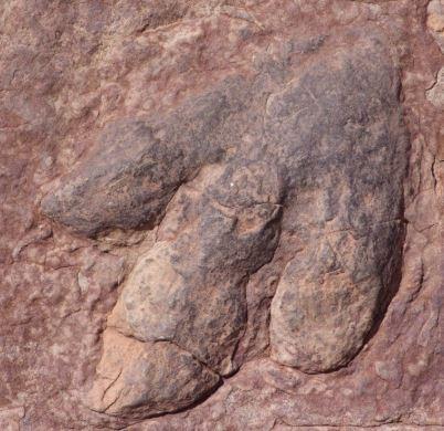 ¿Qué es un fósil y qué tipos existen?