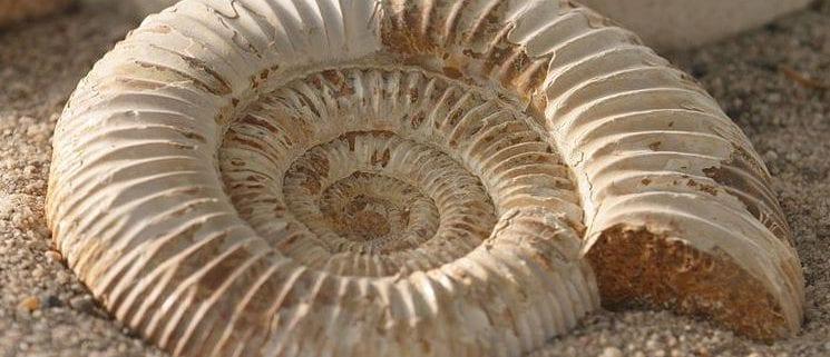 que es un fosil y como se forma un fosil