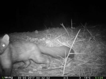 Curso de Seguimiento de fauna mediante telemetría