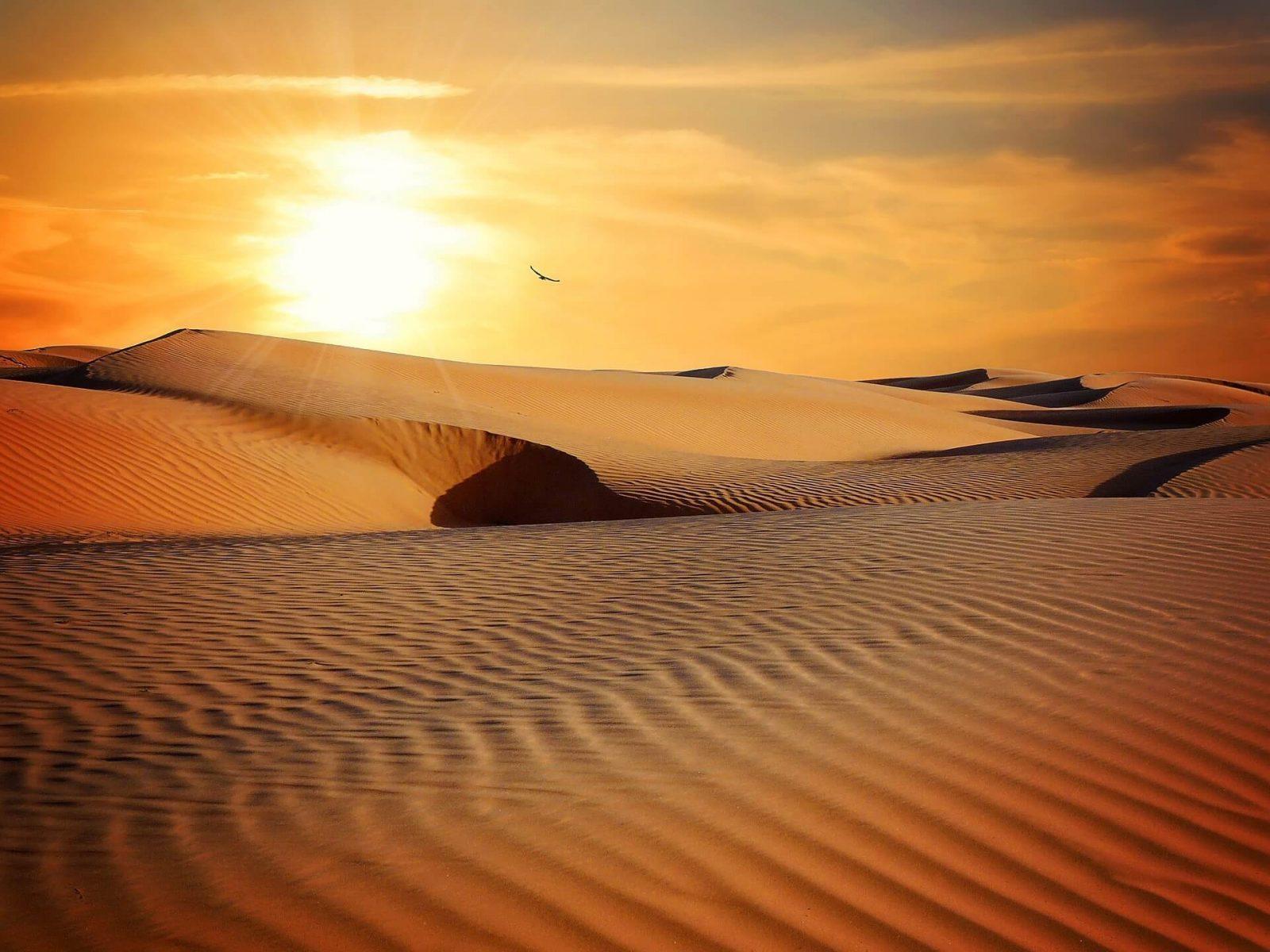 El desierto: Formación y tipos