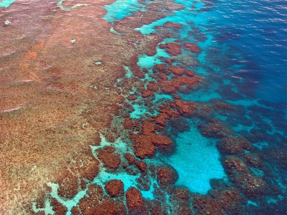 Los arrecifes de coral: ¿Cómo se forman y cuál es su función?
