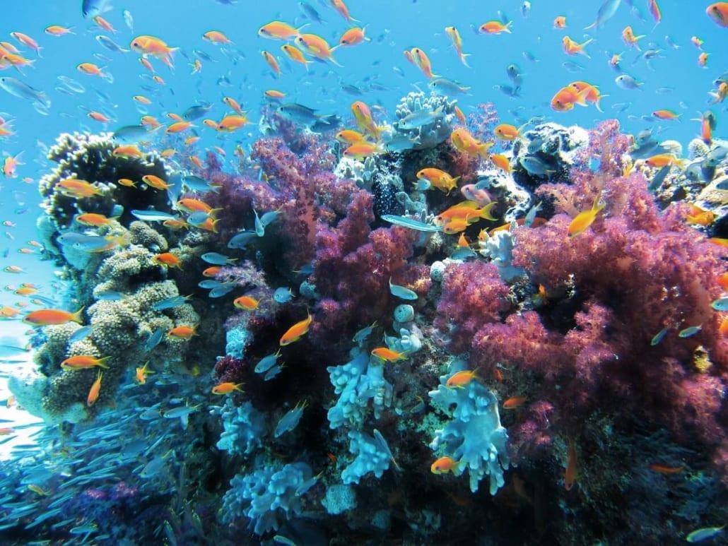 arrecife de coral en australia