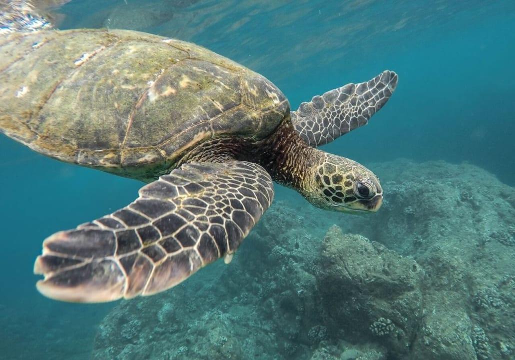 tortuga arrecifes de coral en australia
