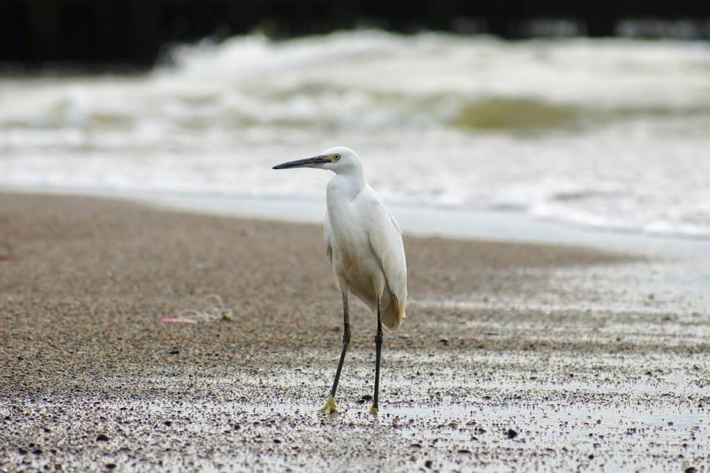 fauna estuarios