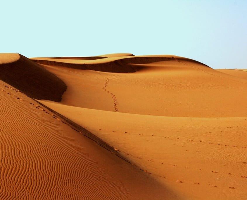 ecosistema desertico