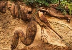 Fósiles de dinosaurios en el mundo