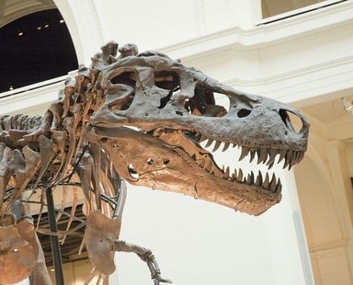 Fósil T-Rex